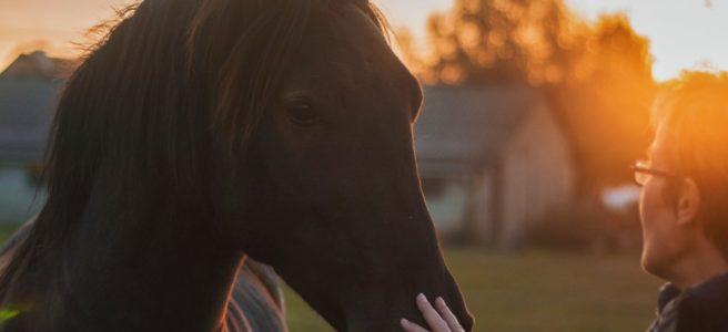 Upplev den obeskrivliga relationen till hästen